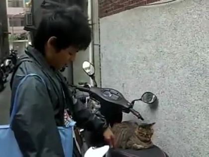 cat just likes to sit on his motorbike - Video & GIFs | Animals & Pets, funny cats, cat breeds, sports motorcycles, Asian men, men's clothing, Japanese travel