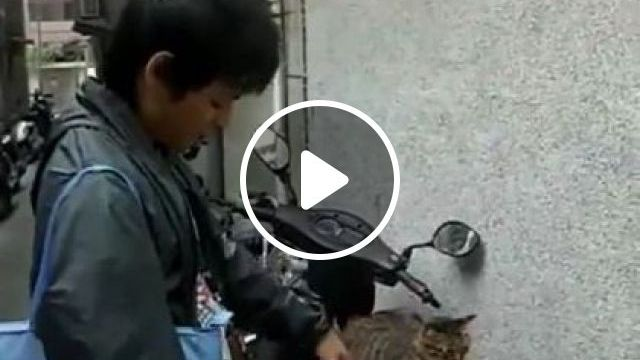 cat just likes to sit on his motorbike 9gag reddit - Funny Videos - funnylax.com - Animals & Pets, funny cats, cat breeds, sports motorcycles, Asian men, men's clothing, Japanese travel