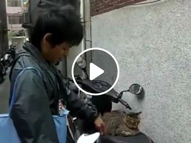cat just likes to sit on his motorbike, Animals & Pets, funny cats, cat breeds, sports motorcycles, Asian men, men's clothing, Japanese travel