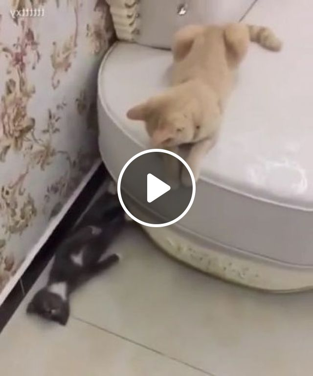Cats Like To Play In Living Room - Video & GIFs | Animals & Pets, funny cats, cat breeds, living room furniture