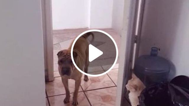 In apartment,cat does not want dog to enter his room, Animals & Pets, cats, dogs, dog breeds, luxury apartments, rooms