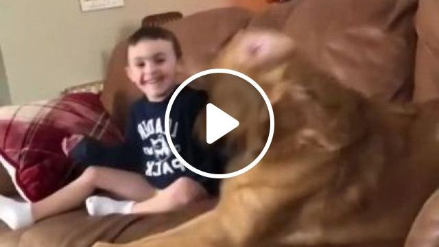 In Living Room,baby And Dog Play With Music - Video & GIFs | Animals & Pets, dog, baby, baby fashion, baby supplies, living room, luxurious furniture, luxurious sofa