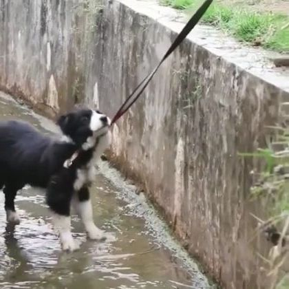 A good dog saves another dog