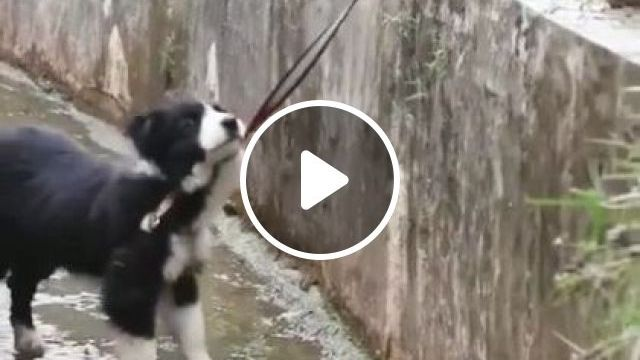 A Good Dog Saves Another Dog - Video & GIFs | Animals & Pets, smart dogs, friendly animals, dog breeds
