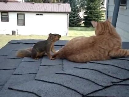 Very fast squirrel on cat's back