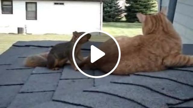 Very fast squirrel on cat's back, Animals & Pets, black cats, funny cats, smart squirrels, home yards