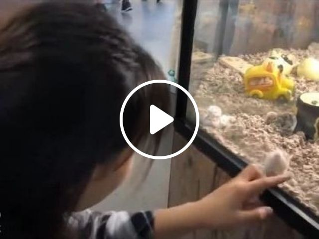 Mouse In Glass Box, Move With Girl's Finger - Video & GIFs | Animals & Pets, winter hamster, cute girls, girls clothes, pet care, cute animals