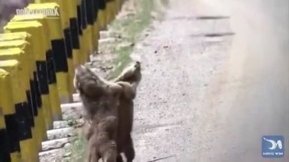 Very happy squirrel to meet on the street