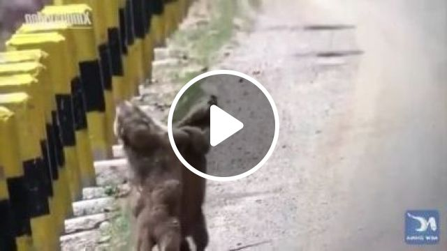 Very happy squirrel to meet on the street, Animals & Pets, funny squirrels, adorable animals