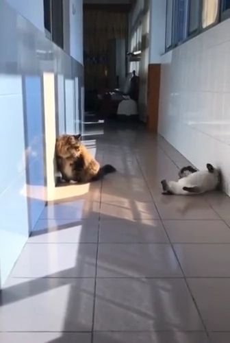 cat really wants to play with another cat