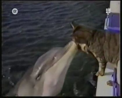 In parks, cats and dolphins are friend