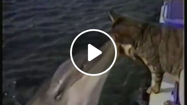 In parks, cats and dolphins are friend, Animals & Pets, cute cats, pet care, health care, friendly dolphins, sea travel