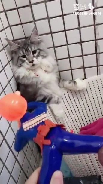 Kittens like to play with children's toys