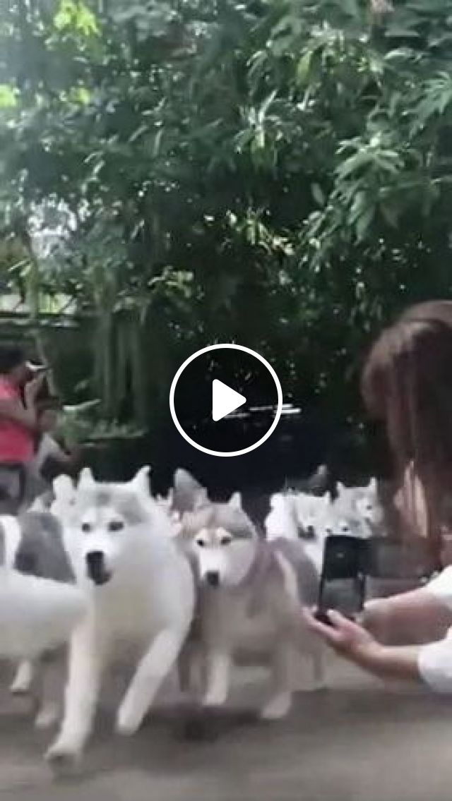 Girl Filming With Her Smartphone Adorable Dogs - Video & GIFs | Animals & Pets, cute girls, female clothes, smart phones, camera recording, high definition, cute dogs, dog breeds