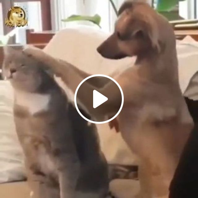 Cat And Dog Are Friends - Video & GIFs | Animals & Pets, cute cats, smart dogs, dog breeds, luxury apartments