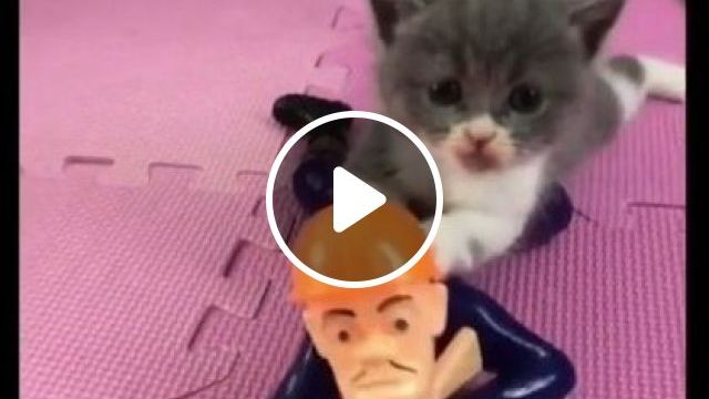 Cats Also Like Playing Toys Automatically - Video & GIFs | Animals & Pets, black cats, cute kittens, cat breeds, automatic toys, premium toys