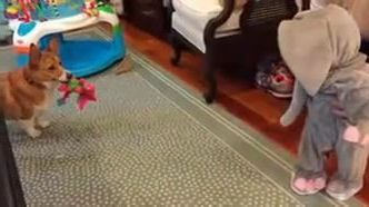 dog brings toys to baby in living room