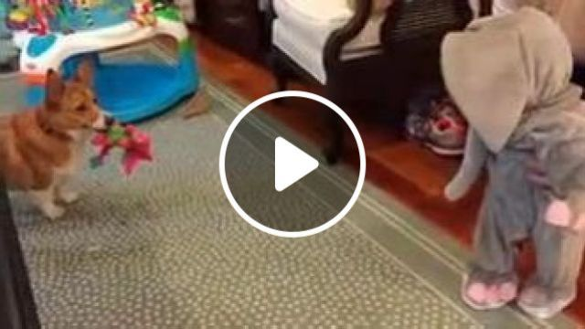 Dog Brings Toys To Baby In Living Room - Video & GIFs | Animals & Pets, cute dogs, children's toys, children's health, children's clothes, living room, luxurious furniture
