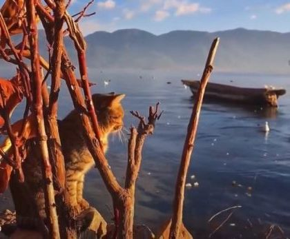 Cats are traveling to  mountain lake and beautiful scenery 9gag reddit - Funny Videos - funnylax.com - Animals & Pets, lovely cats, cat breeds, tourist lake, mountain travel, beautiful scenery