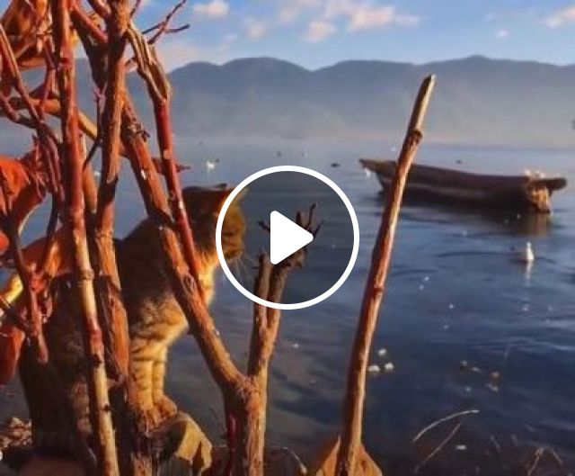 Cats Are Traveling To Mountain Lake And Beautiful Scenery - Video & GIFs | Animals & Pets, lovely cats, cat breeds, tourist lake, mountain travel, beautiful scenery