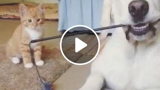 Kitten And Plastic Toys - Video & GIFs | Animals & Pets, smart dogs, yellow cats, cute kittens, dog breeds, luxury apartments