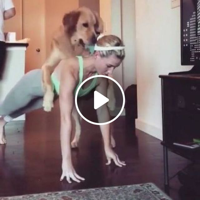 Lmao!! Workout.. He's Cutest. He's A Very Good Dog And Has A Nice Personality. - Video & GIFs   Animals & Pets, healthy girls, sports clothes, smart dogs, dog breeds, yoga practice, luxury apartments, living room furniture