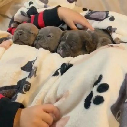 In winter, puppies are lying on warm beds in bedroom