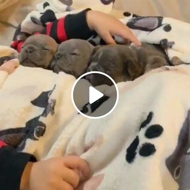 In Winter, Puppies Are Lying On Warm Beds In Bedroom - Video & GIFs   Animals & Pets, European winter, cute puppies, dog breeds, premium mattresses, bedroom furniture