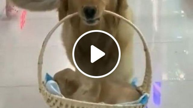 Girl And Dog Mom Go To Supermarket - Video & GIFs   fashion & beauty, girls, fashion women, mother dogs, dog breeds, supermarkets, consumer goods