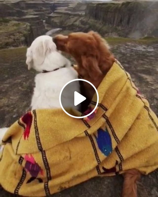 Dogs With Mountain Travel - Video & GIFs | nature & travel, mountains, dogs, animals, pets