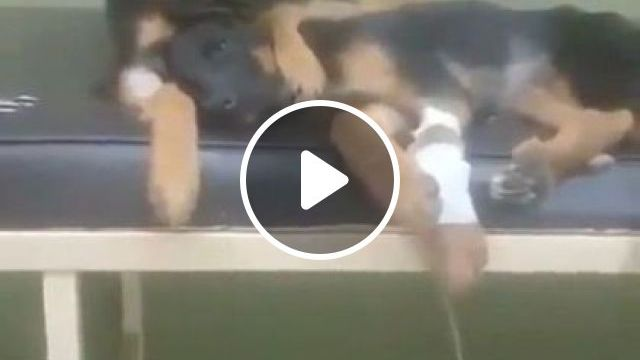 Puppy Next To Mother Dog In Hospital - Video & GIFs | animals & pets, puppies, dog breeds, hospital, health, medical instruments