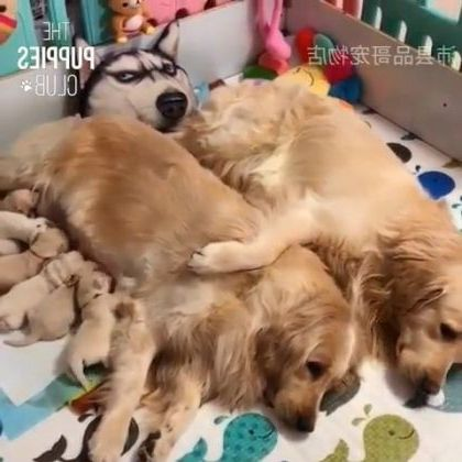 Happy dog family in apartment