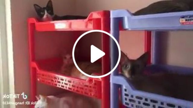 Cats Are Happy To Stay In Apartment - Video & GIFs | animals & pets, cats, cat breeds, apartments