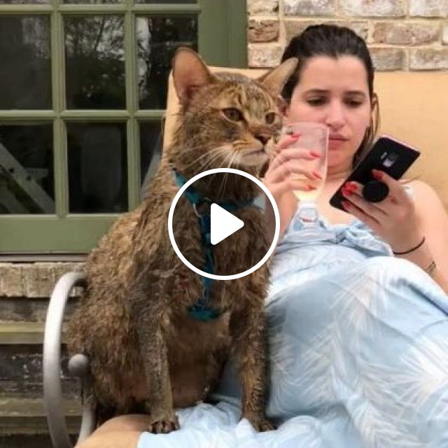 Cat And Girl In Yard - Video & GIFs   animals & pets, cats, cat breeds, girls, women fashion, smart phones