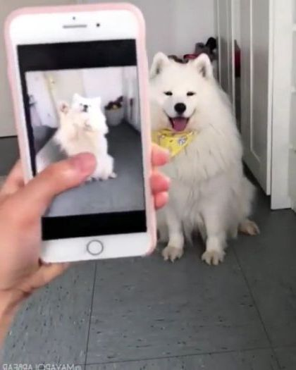 girl takes a picture of dog with smart phone - Video & GIFs   art & design,girls,photography,high definition,dogs,smart phones