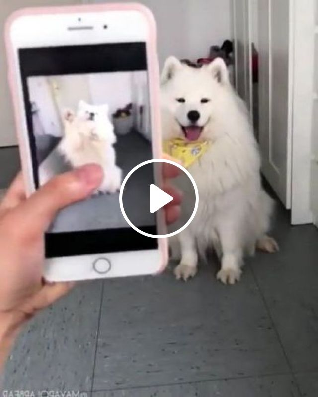 Girl Takes A Picture Of Dog With Smart Phone - Video & GIFs | art & design, girls, photography, high definition, dogs, smart phones