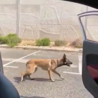 Dog is dancing with car on the street