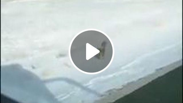 Camera recording fox looking for food - Funny Videos - funnylax.com - science & technology,camera,video recording,smartphones,high definition