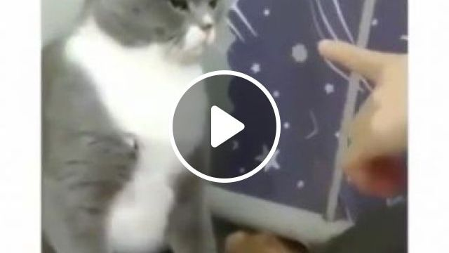 Cats Like To Play In Apartment - Video & GIFs | animals & pets, cats, cat breeds, apartments, furniture