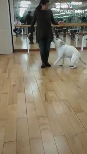 dog exercises with girl