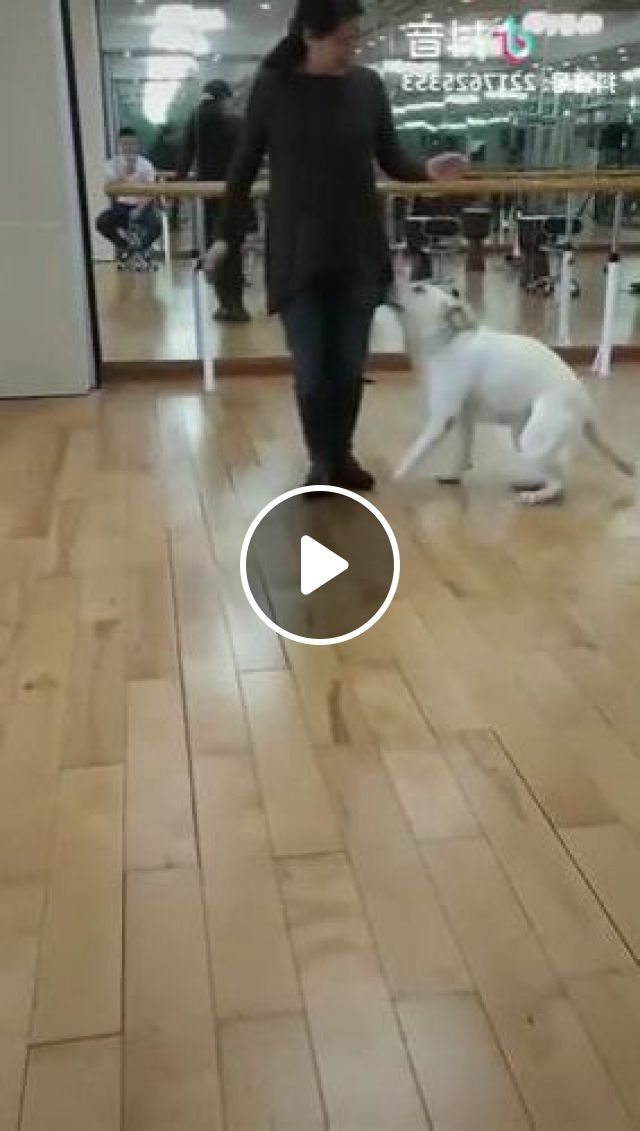 Dog Exercises With Girl - Video & GIFs   animals & pets, dogs, dog breeds, exercise, girls, fashion sports, sports equipment