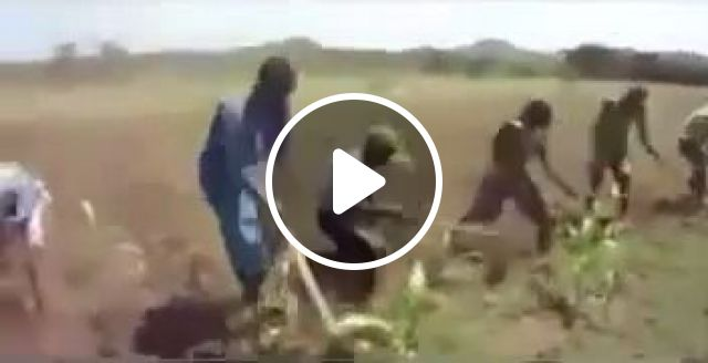 Farmers Are Working Hard On The Field - Video & GIFs   science & technology, farmers, fields, agricultural tools