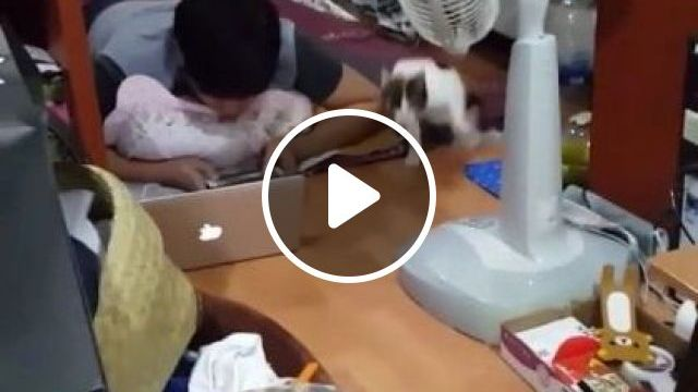 Cat Ran Very Quickly To Living Room - Video & GIFs   animals & pets, cats, living rooms, apartments, furniture, laptops