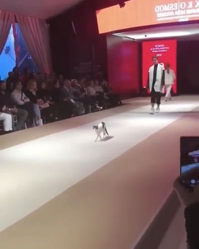 Cat is showing fashion