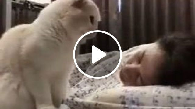 Beautiful dream and cat - Funny Videos - funnylax.com - Animals & pets, white cats, cat breeds, bedroom furniture, air conditioning, pretty girls, clothes fashion