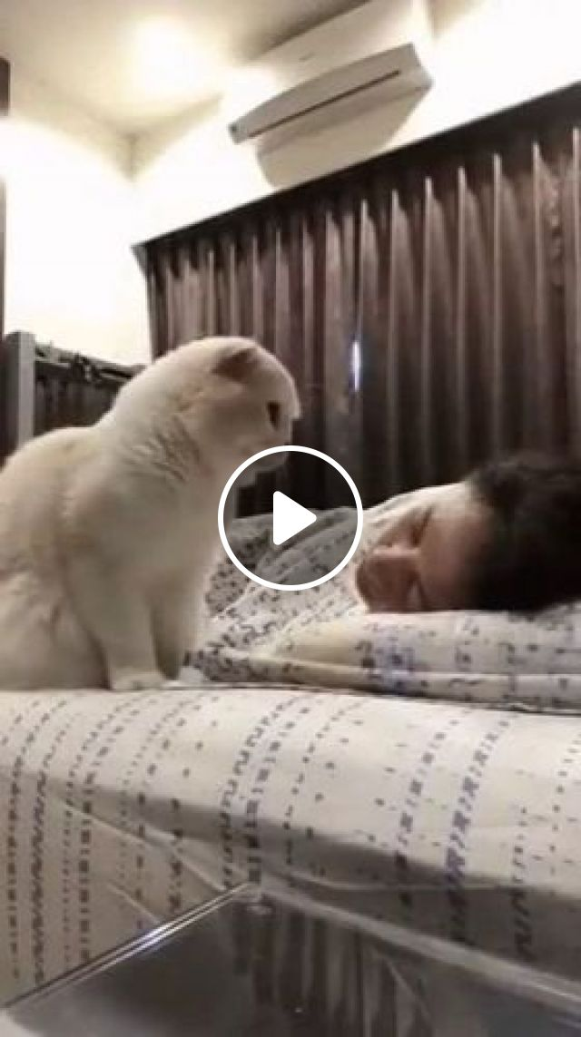 Beautiful Dream And Cat - Video & GIFs | Animals & pets, white cats, cat breeds, bedroom furniture, air conditioning, pretty girls, clothes fashion