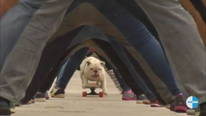 Dog and skateboard with world record