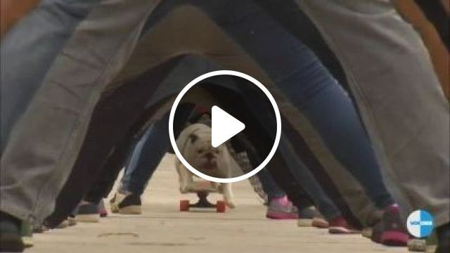 Dog and skateboard with world record - Funny Videos - funnylax.com - animals & pets,dogs,dog breeds,skateboards,fashion men and women