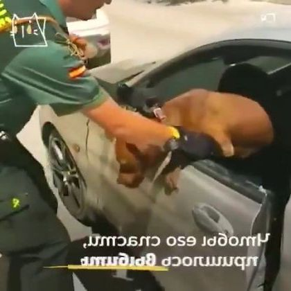 Spanish cops saved pitbull locked for 3 hours in car - Video & GIFs   Auto & Technique, car glass, good police, dog breedss