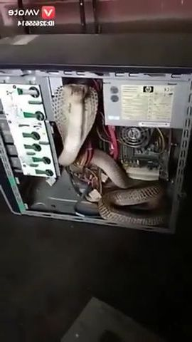 Who installed python on the server - Funny Videos - funnylax.com - science & technology,server,hardware,cpu,operating system